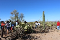 Tanisha Tucker (Tohono O'odham) demonstrates how to use a kuipad (picking stick) and knock down Saguaro fruit for a group from the University of Arizona. Tucker, her mother Stella Tucker and family members continue the tradition of picking Saguaro fruit with a camp located in the Saguaro National Park West.