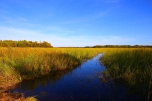Wild rice lake near Spirit Lake Native Farm in Minnesota.